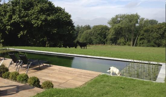 Piscine avec terrasse bois et pelouse 4Landscape photo n°47