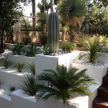 Jardin sec blanc et vert