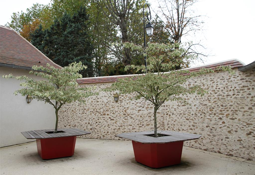 Terrasse marseillaise - Arbres nains pour terrasses ...