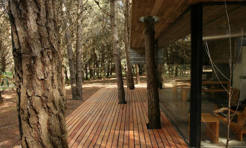 Terrasse en bois travers e par les arbres maison bois d 39 architecte - Arbre pour terrasse appartement ...