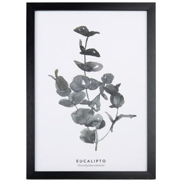 Tableau eucalyptus 30x45