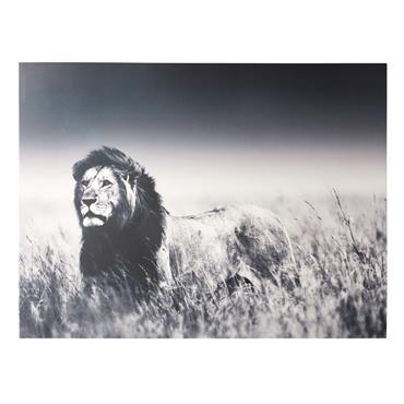 Tableau photo lion 160x120