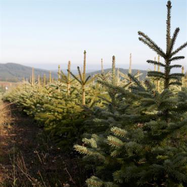 Envisageriez-vous un Noël sans sapin ? Pour la plupart d'entre nous, certainement pas ! Le sapin de Noël est l'hôte ... Domozoom