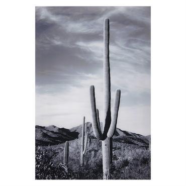 EXOTISME MODERNE Cette année, les cactus sont partout ! Retrouvez-les dans une version artistique avec le tableau photo en Plexiglas® ARIZONA pour une déco plus réaliste que jamais. HIPPIE CHIC ...