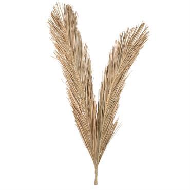 Branche fibre végétale séchée