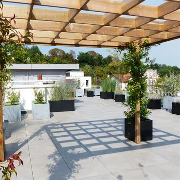 Installation d'une treille pour faire pousser des plantes grimpantes et ainsi ombrager la terrasse - Vue du dessous