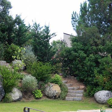 Végétaux dans un enrochement avec escalier en pierres