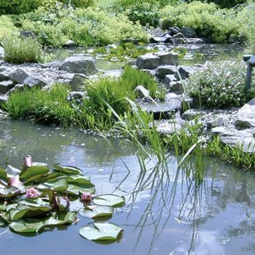 Bassin tout naturel