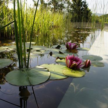 Baignade écologique avec sensation de pleine nature.