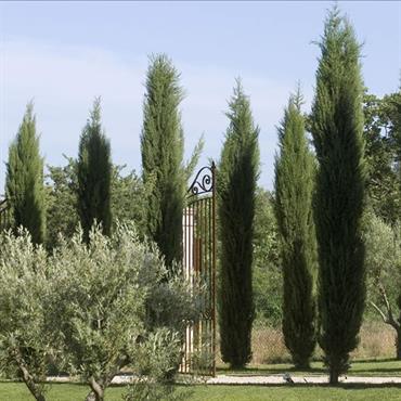 Portail majestueux en fer forgé marquant l'entrée de la propriété dans un environnement provençal planté d'oliviers et de cyprès.