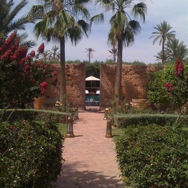 Allée avec palmiers