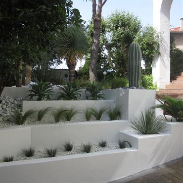 Jardin sec exotique