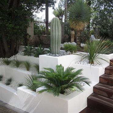 Par terre de plante exotique ; jardin sec