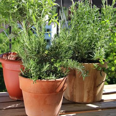 Balcon aménagé en jardin avec plantes en pots