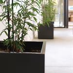 Couloir avec jardinières noires