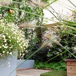 Des plantes fleuries habillent le mur du jardin