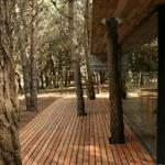 Terrasse en bois traversée par les arbres