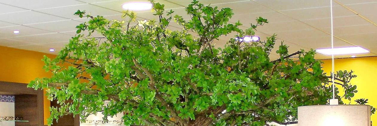 Hanamiest - Arbres semi naturels sur-mesure sur Domozoom